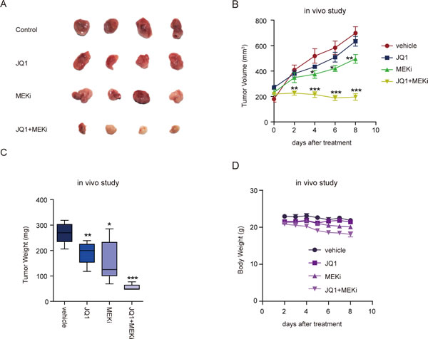 Combined treatment with BET and MEK inhibitors suppressed ovarian tumor growth