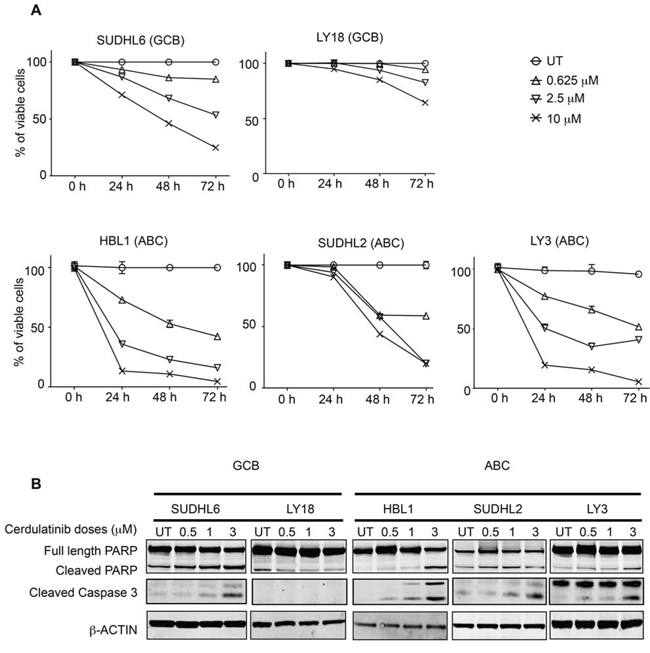 Cerdulatinib induces apoptosis in both GCB and ABC subtypes of DLBCL cell lines via caspase 3 and PARP cleavage.