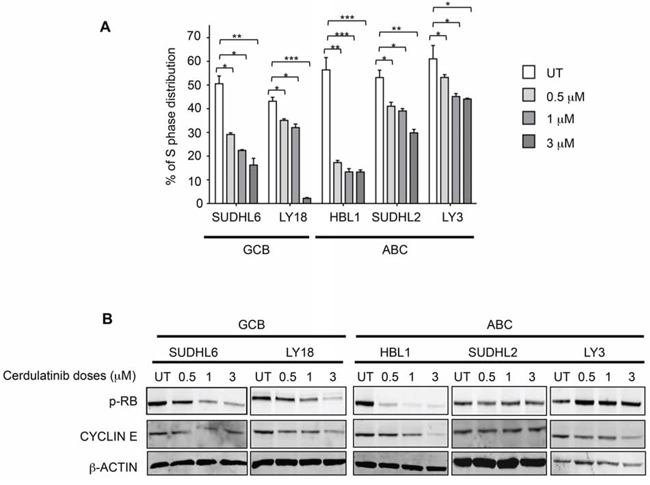 Cerdulatinib blocks cell cycle in both ABC and GCB subtypes of DLBCL via inhibition of RB phosphorylation and down-regulation of cyclin E.