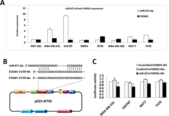 miR-671-5p targets FOXM1 in breast cancer cell lines.