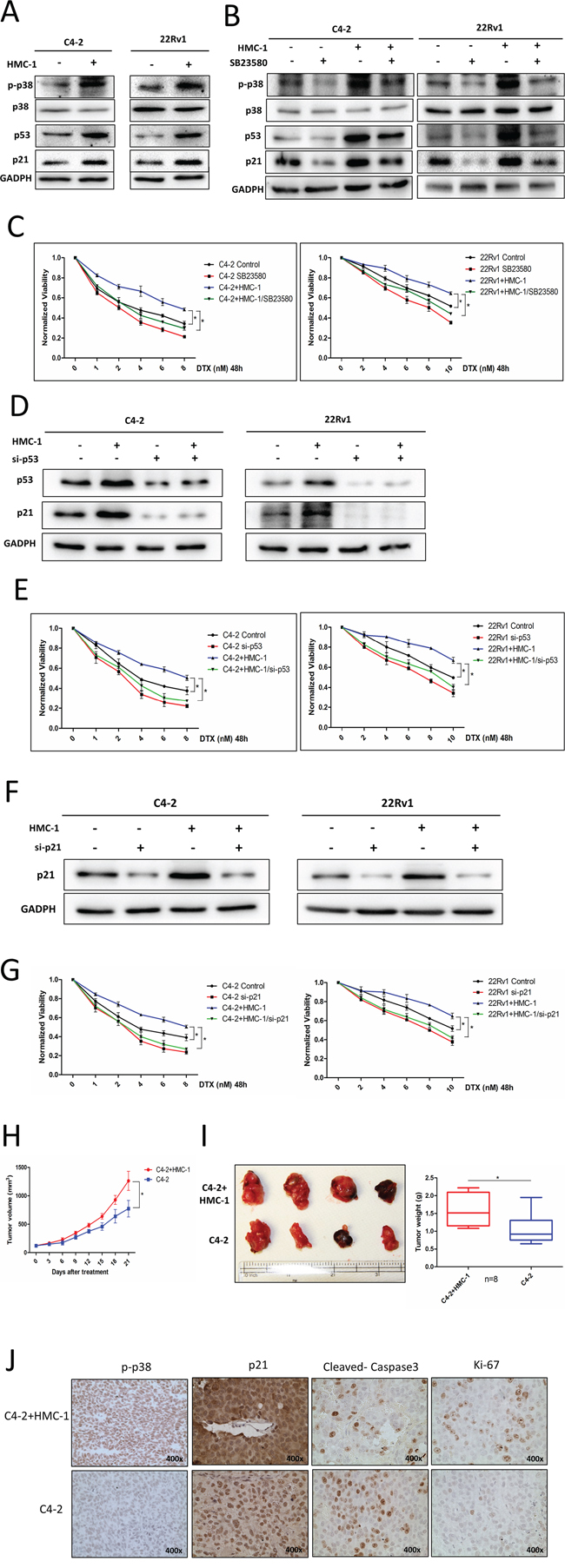 Mechanism why recruited mast cells can alter PCa cell chemotherapy sensitivity and in vivo data.