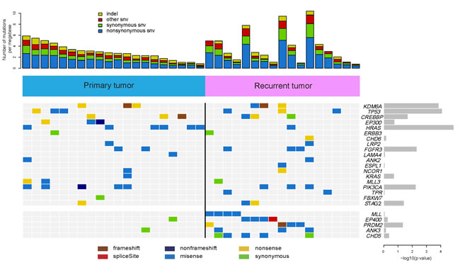 Frequently mutated genes identified in 37 bladder carcinomas.
