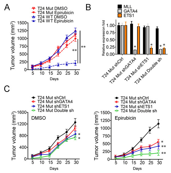 GATA4 and ETS1 participate in the drug-resistance of