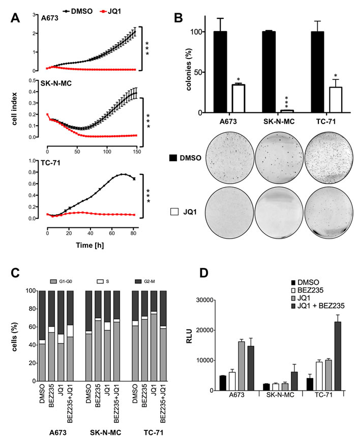 Treatment with JQ1 blocks proliferation, cell cycle progression and induces caspase dependent apoptosis.
