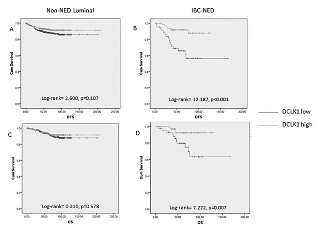 Kaplan-meier analysis of DFS and OS on non-NED luminal and IBC-NED cancers according to DCKL1 expression.