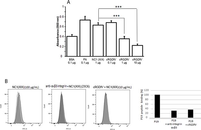 cRGDfV blocking peptide inhibits the NC1(XIX) binding on αvβ3 integrin.