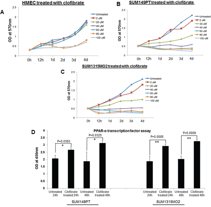 Effect of clofibrate treatment on cell proliferation.