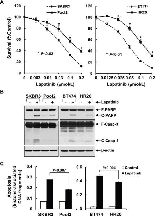 Trastzumab-resistant breast cancer cell lines are significantly insensitive than their parental lines to lapatinib-mediated growth inhibition and apoptosis.