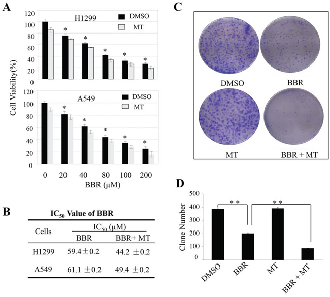 Melatonin enhanced the berberine-mediated inhibitions of cell growth and colony formation.