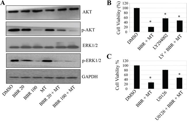 Melatonin enhanced the berberine-mediated inactivation of Akt/ERK signaling.