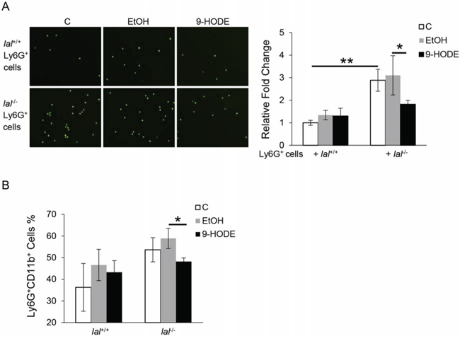 PPARγ ligand decreases lal-/- MDSCs transendothelial migration capacity and differentiation from lal-/- Lin- cells.