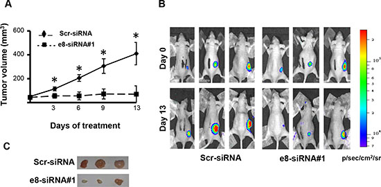 Treatment with e8-siRNA#1 inhibits tumor growth in vivo.