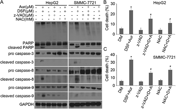 z-VAD-FMK and NAC prevented Aur + DSF from inducing capase activation and PARP cleavage.