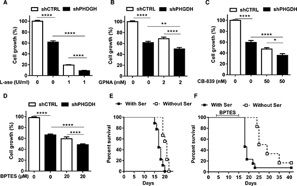 PHGDH silencing and serine deprivation inhibit leukemia cell growth and reinforce the effects of inhibitors of Gln metabolism.