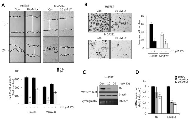 The transforming growth factor (TGF)-β receptor I/II inhibitor LY2109761 decreases FN and MMP-2 expression in TNBC cells.
