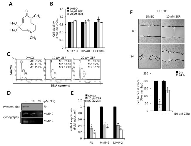 The effect of ZER on cell viability, FN, MMP-2, MMP-9 mRNA expression.