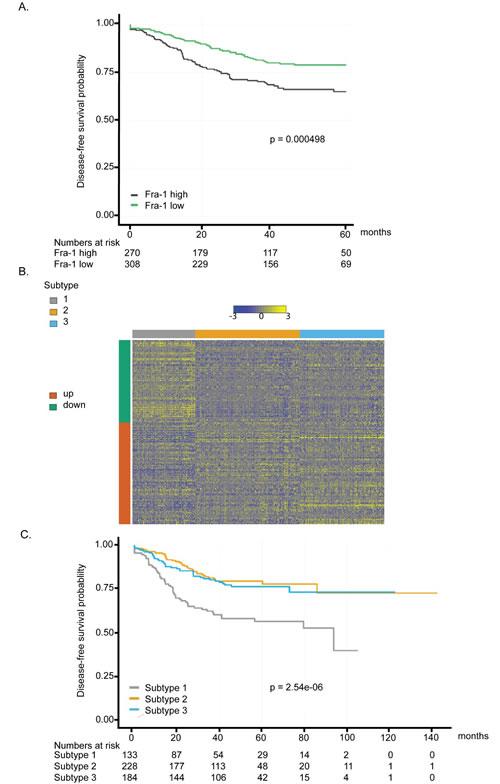 Fra-1-regulated gene signature is a prognostic classifier in colon cancer.