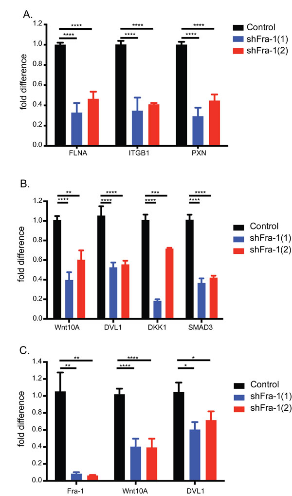 Fra-1 regulates the expression of Wnt pathway components.