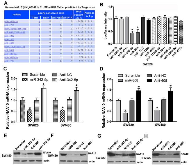 Selection of miRNAs targeting NAA10.