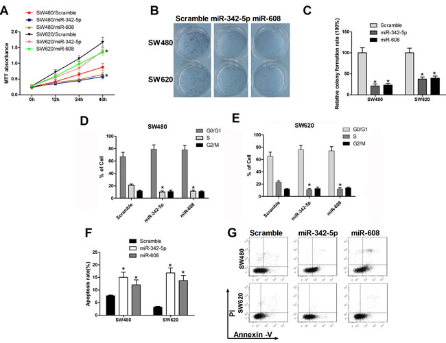 MiR-342-5p and miR-608 suppressed cell proliferation, migration, and colony formation and promoted apoptosis in colon cancer cells.