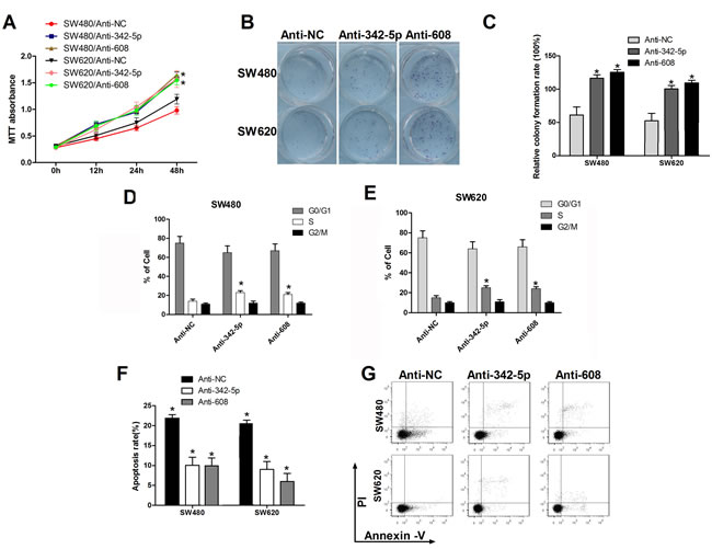 Anti-342-5p and anti-608 increased cell proliferation, migration, and colony formation and suppressed apoptosis in colon cancer cells.