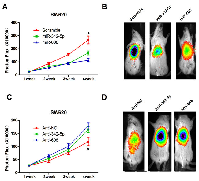 MiR-342-5p and miR-608 suppressed colon cancer cell tumorigenesis
