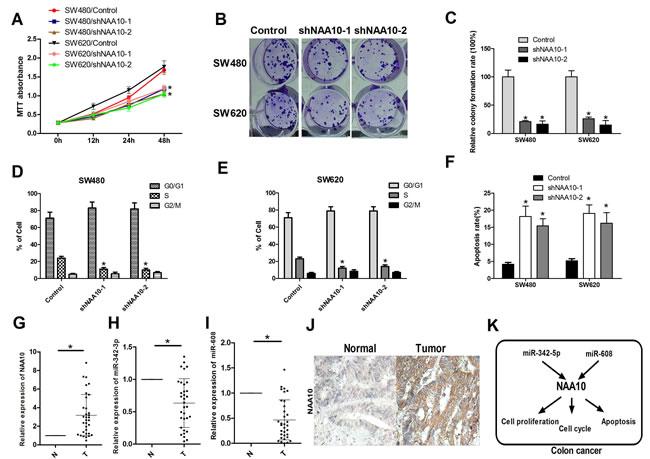 NAA10 participated in colon cancer tumorigenesis