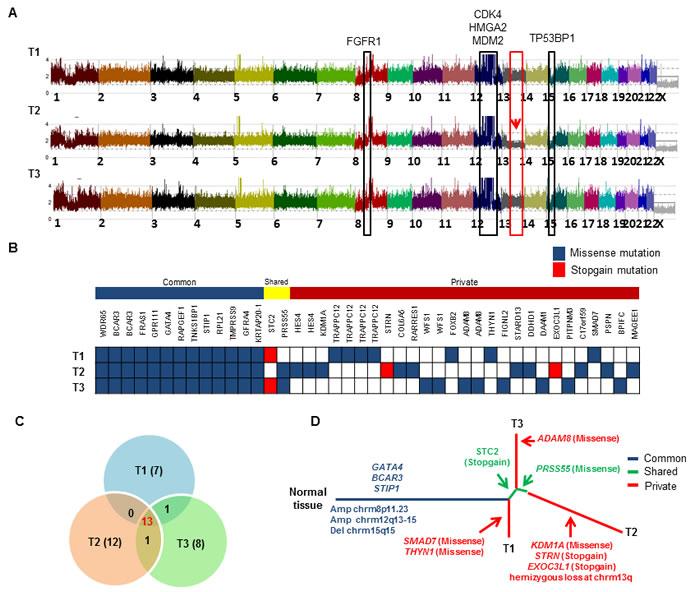Landscape of intra-tumor heterogeneity.