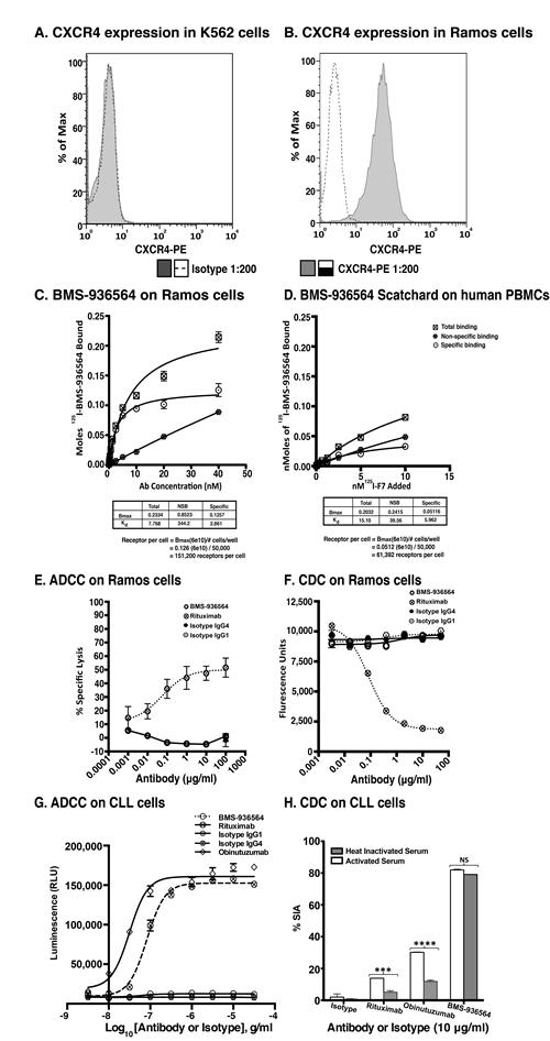 Scatchard analysis of Ulocuplumab (BMS-936564) binding to Ramos cells, human PBMCs and ADCC & CDC activity in Ramos cell line (Burkitt's lymphoma).