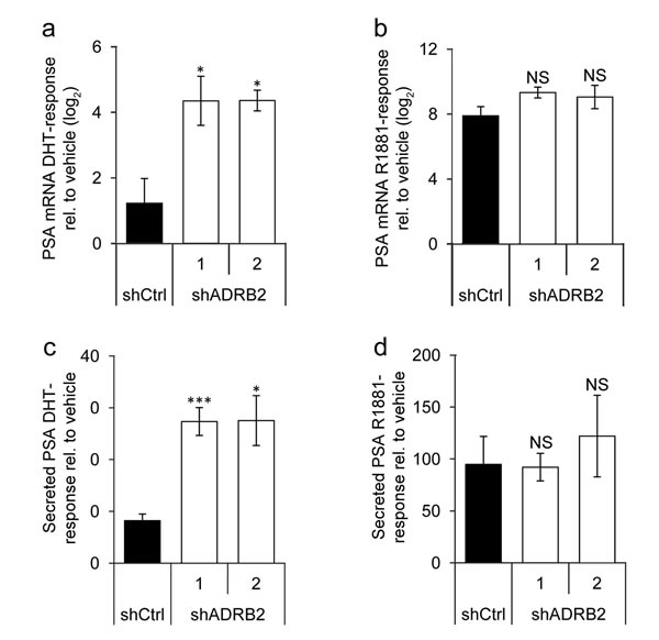 Prostate-specific antigen responsiveness is higher in shADRB2 than in shCtrl cells.