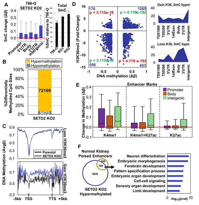 Distribution of DNA methylation genome-wide and integration with H3K36me3 under SETD2 loss-of-function conditions.