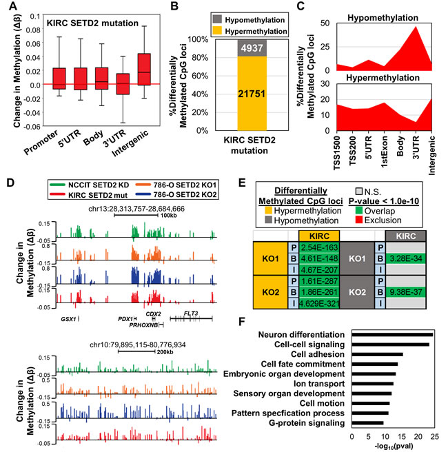 Epigenetic changes in SETD2 inactivation cell line models are recapitulated in