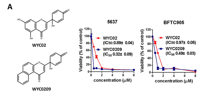 Effects of WYC02 and WYC0209 in human bladder cancer cell lines BFTC 905 and 5637.