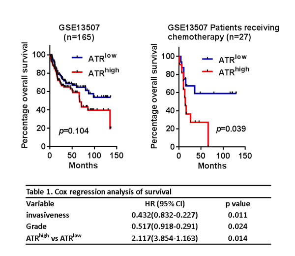 High ATR expression was associated with poor prognosis.