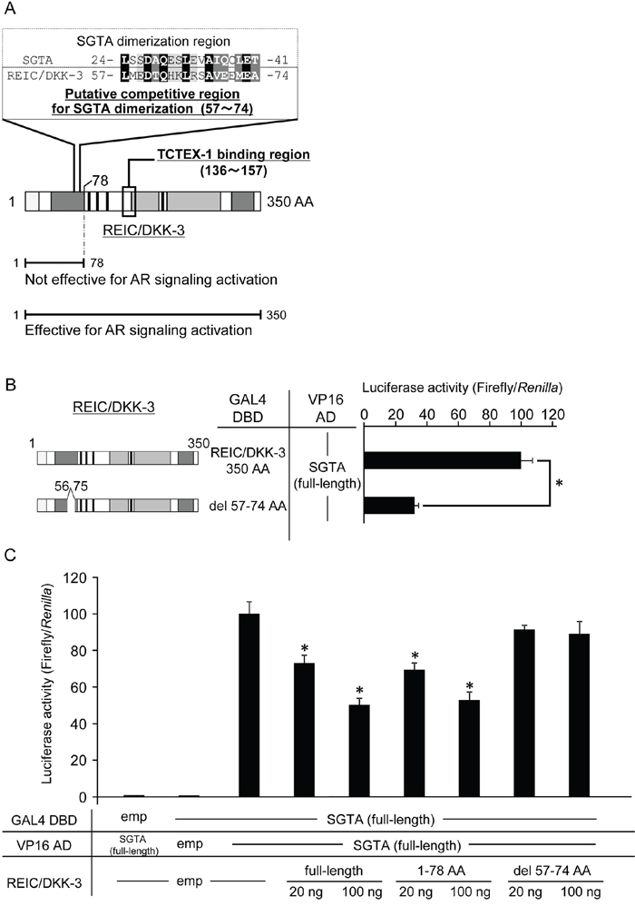 The proposed binding region of the REIC/DKK-3-SGTA interaction