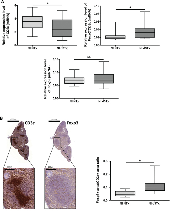 Evaluation of total T cells (CD3ε+) and Tregs (Foxp3+) reserve in non-infected (NI) mice spleens.
