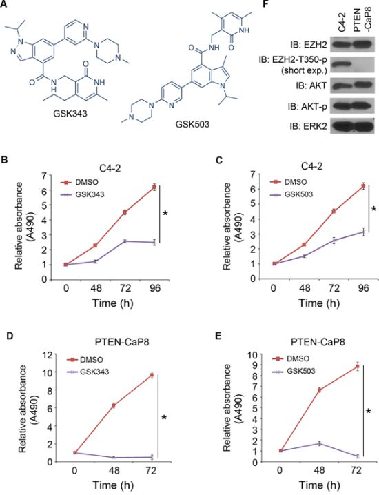 Inhibition of CRPC cell growth by the EZH2 small molecule inhibitors GSK343 and GSK503.