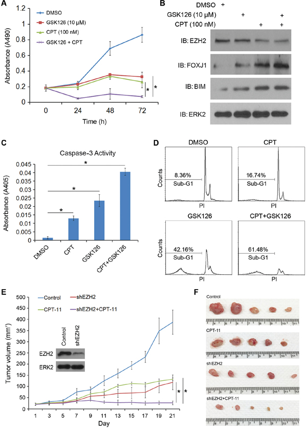 The EZH2 small molecule inhibitor GSK126 sensitizes CRPC cells to CPT-induced apoptotic death and enhances CPT-mediated inhibition of cell growth.