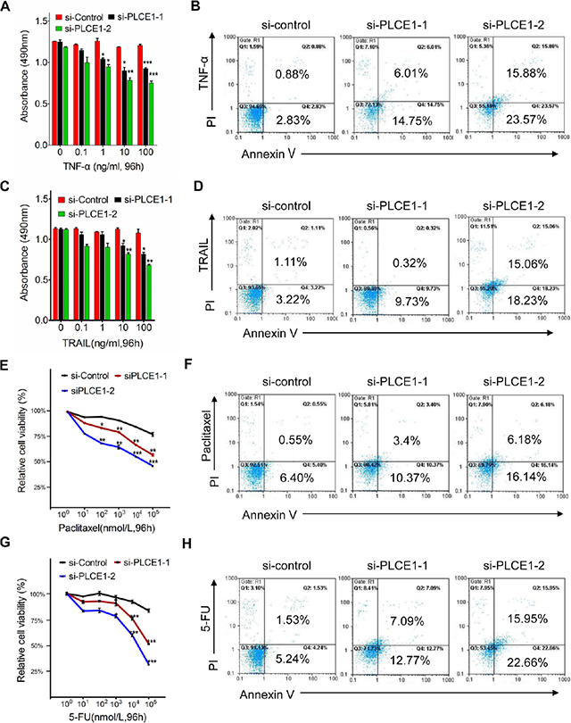 PLCE1 knockdown enhances apoptosis induced by TNFα, TRAIL, paclitaxel, and 5-FU.