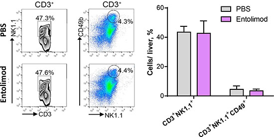 Entolimod has no effect on maturation of NKT cells in the liver.