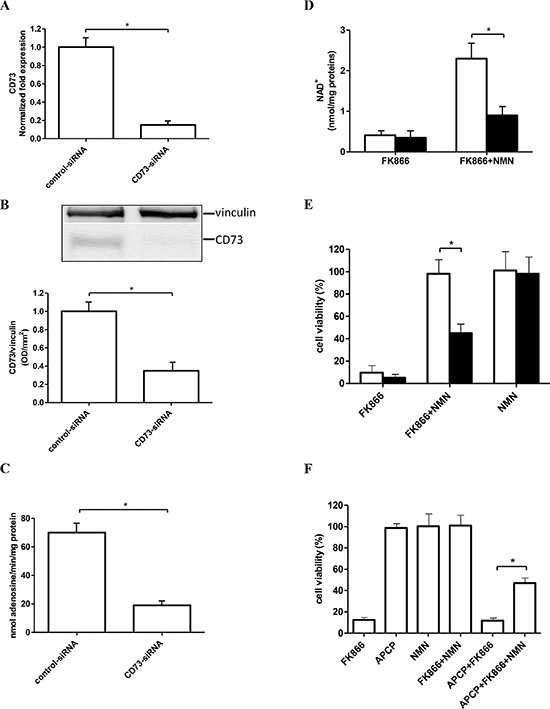 Silencing of CD73 expression or pharmacological CD73 inhibition impairs the NMN-mediated rescue from FK866-induced cell death.