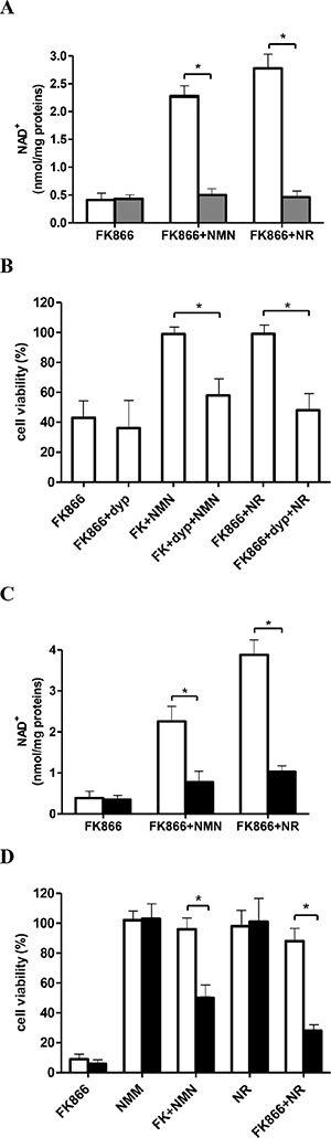 Inhibition of NR transport or silencing of NRK1 expression impairs the NMN-mediated rescue from FK866-induced NAD+ depletion and cell death.