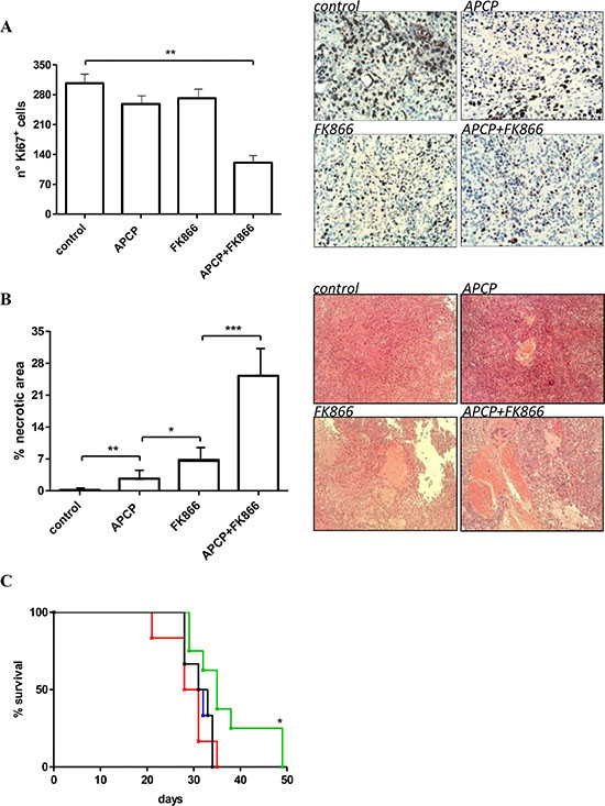 Antitumor effects of administration of FK866, APCP and FK866+ APCP in OVCAR- 3 bearing mice.