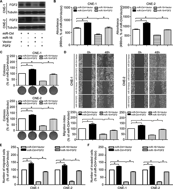 FGF2 mediates the effect of miR-16 on NPC cell proliferation and invasion.