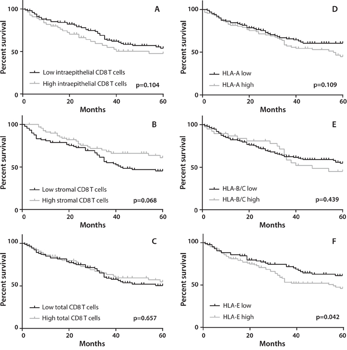 Association of CD8+ T cell infiltration and HLA expression with overall survival (OS).