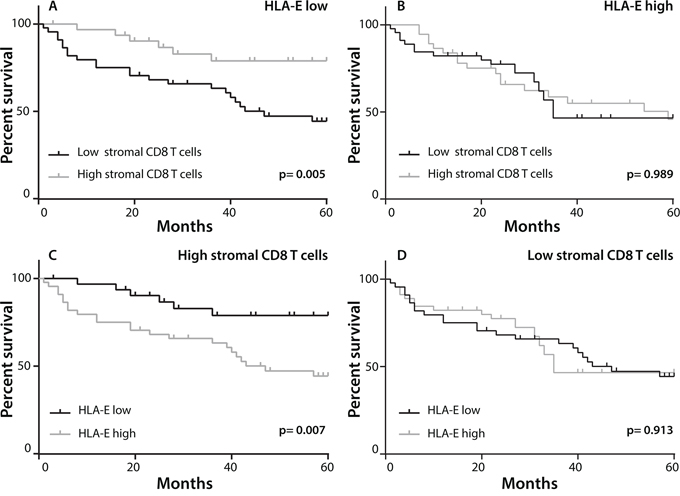 Prognostic benefit in HLA-E negative tumors with high CD8+ T cell infiltration.