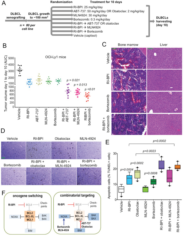 Figure 5. Targeting or pro-survival pathways increased the effect of RI-BPI in vivo