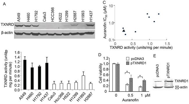 Figure 3. Association of TXNRD1 expression and auranofin's anticancer activity in NSCLC cells.