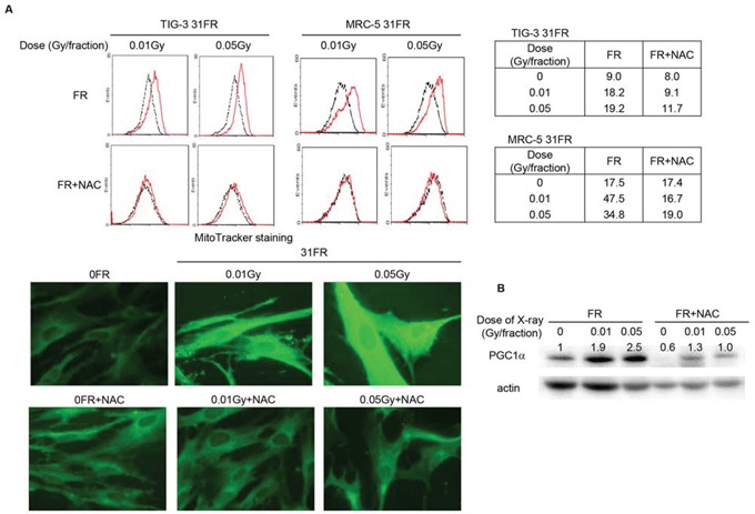 Figure 1. Mitochondrial mass, oxidative DNA damage in mitochondrial DNA and GSH levels in low-dose long-term FR cells