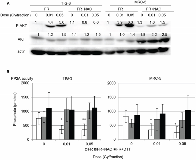 Figure 4. AKT activation after long-term FR AKT activation via down-regulation of PP2A activity after low-dose long-term FR